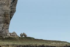 De stenen lijken kiezels vergeleken bij de hoge klif
