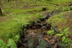 het bos bedekt met mos