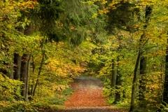Het pad in volle herfstkleuren